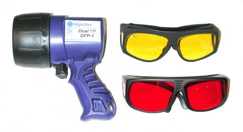 Fluorescent protein flashlight and glasses
