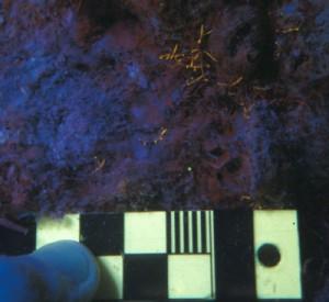 Juvenile coral