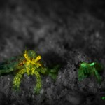 Hermit crabs (c) Jeff Honda