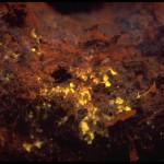 Turf algae on a reef in Florida, fluorescence (c) Charles Mazel
