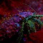 Hermit crab (c) Kerim Sabuncuoglu