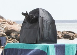 Stereo microscope set up on the beach, with the NIGHTSEA Eclipse MicroTent installed