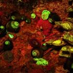 Rock wall scene, fluorescence (c) Charles Mazel