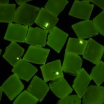 Fluorescing gel defects in nylon granules