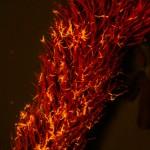 Seaweed fragment, fluorescence