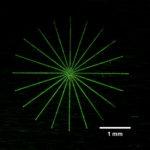 TAM panel starburst with fluorescent penetrant