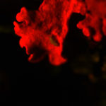 Fungus autofluorescence (c) Rawil Fakhrulin