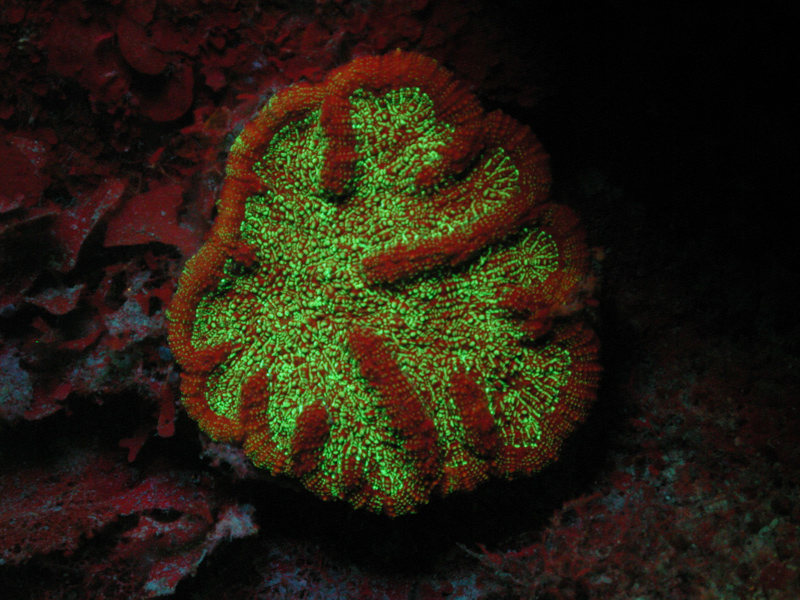 Fun With Fluorescence Photography Chlorophyll Nightsea