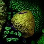 Liquid Motion Film Fluorescence Science 1