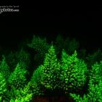 Fluorescent Staghorn Corals (c) Alex Tyrrell