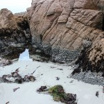Tide pools at north end of Asilomar State Beach (c) Charles Mazel