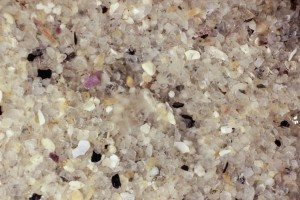 Sand from tide pool, white light (c) Charles Mazel