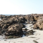 Tidepool area at north end of Asilomar State Beach (c) Charles Mazel