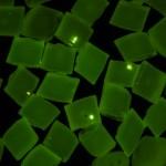 Fluorescing gel defects in nylon granules