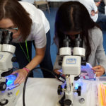 Dr. Jenny Lenkowski and a young student observing fluorescent zebrafish under the microscope.