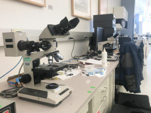 Fig. 1 - Olympus BH2 microscope on lab bench